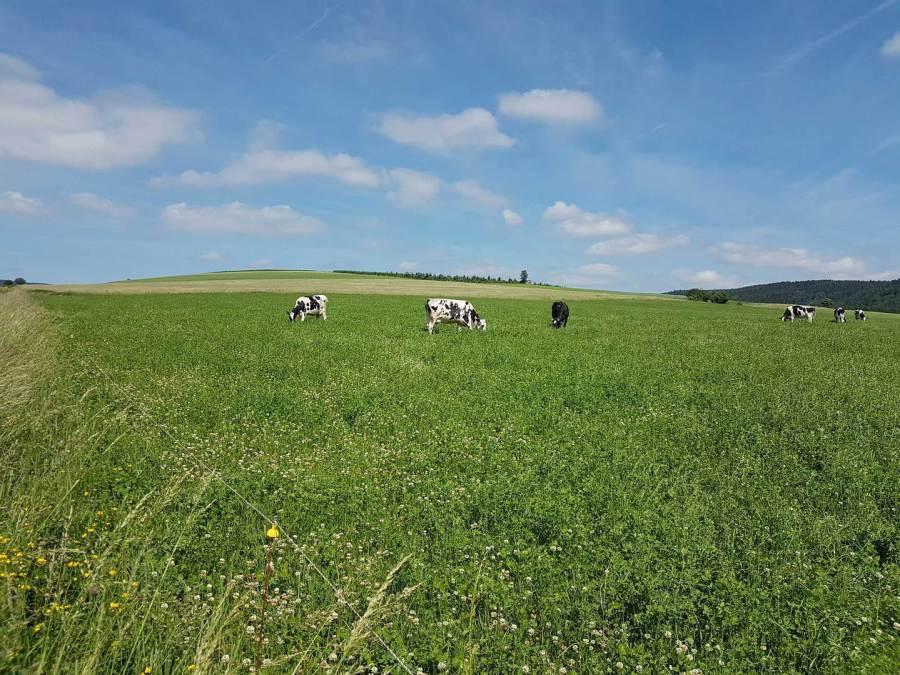 Bauernhof Göbel in Korbach-Niederschleidern